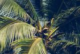 Palm trees under blue sky. Vintage post processed. - 233024377