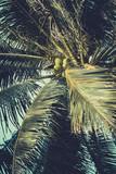 Palm trees under blue sky. Vintage post processed. - 233024755