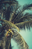 Palm trees under blue sky. Vintage post processed. - 233024920
