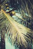 Palm trees under blue sky. Vintage post processed. - 233025320