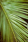 Palm trees under blue sky. Vintage post processed. - 233026570