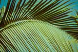 Palm trees under blue sky. Vintage post processed. - 233026736