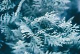 Christmas background. Green fir tree. - 233027363