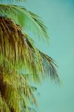Palm trees under blue sky. Vintage post processed. - 233028310