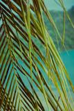 Palm trees under blue sky. Vintage post processed. - 233028392