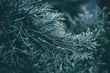 Christmas background. Green fir tree. - 233029301