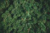Christmas background. Green fir tree. - 233029739