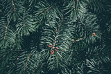 Christmas background. Green fir tree. - 233029774