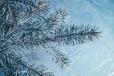 Christmas background. Green fir tree. - 233030349