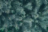 Christmas background. Green fir tree. - 233031335