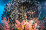 Beautiful, colorful, and healthy coral reef underwater from tropical Indonesia
