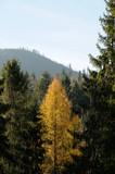 Jesień w górach 3.