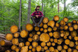 Portrait of lumberjack in forest, many big logs of pine on background. Young male hiker posing near the sawmeal in the pines forest. - 233059709