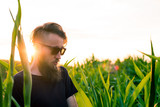 Portrait of a man at corn field in the sunset. - 233063144