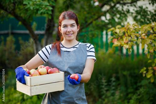 Leinwandbild Motiv Image of happy girl gardener with harvest of apples in wooden box in garden