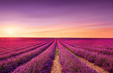 Lavender fields at sunset. Provence, France © stevanzz