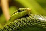 closeup of a snake - 233142968