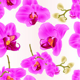Seamless texture Orchids Phalaenopsis closeup purple  beautiful flower  on a white background vintage  vector illustration editable  hand draw
