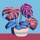 Various indoor plants in single pot on blue wall - 233167781