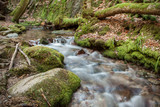 Wasserfall im Schwarzwald - 233174928
