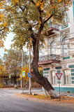 Tree with a curved trunk near the beautiful ancient house with a balcony in the autumn afternoon