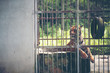 Bengal tiger in cage, Wildlife in cage concept