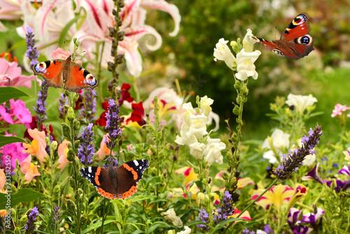 Leinwandbild Motiv Schmetterling 506