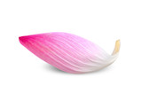 Lotus leaf isolated on white clipping path