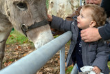 Cute little boy with a donkey. Child give food in the farm.