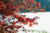 湖の紅葉 - 233196346