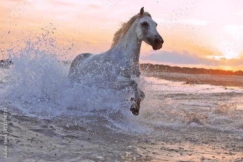 Running horses in water