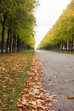 Autumn alley - 233231742