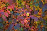 Colorful autumn leaves background pattern. - 233248537