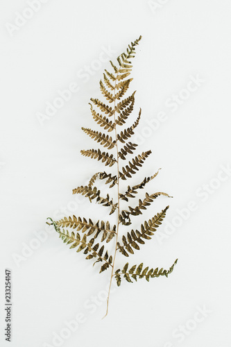 Fern leaf on white background. Flat lay, top view.