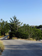 Die Straßezum Gipfel im Nationalpark Biokovo - 233265558