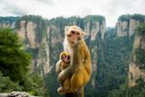 Affen beim stillen - 233266122