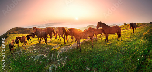 Horses in the sunlight