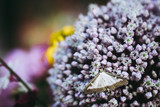 Papillon posé sur un bouquet de fleurs parme