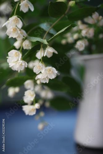 Foto Murales white flowers in spring