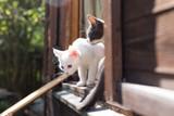 Beautiful little cat