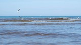 Beautiful seascape with waves, sand beach and swimming seagulls. - 233309521