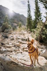dog on an alpine hike