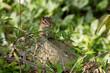 Cute little chipmunk hiding off the path