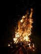 Offenes Feuer mit brennendem Tannenbaum - 233323749