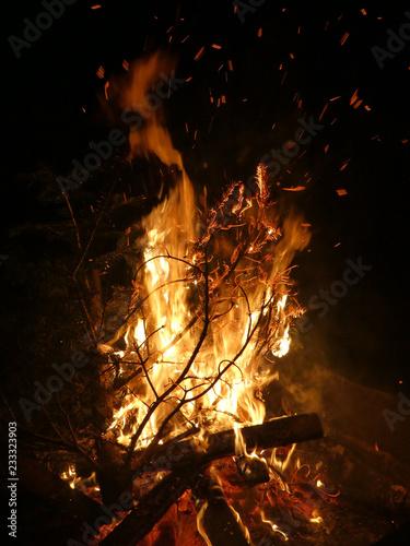 Offenes Feuer mit brennendem Tannenbaum - 233323903