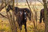 ein Pferd schaut neugierig durch die Sträucher - 233324388