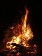 Offenes Feuer mit brennendem Tannenbaum - 233324934