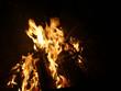 Offenes Feuer mit brennendem Tannenbaum - 233325723