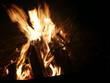 Offenes Feuer mit brennendem Tannenbaum - 233325936