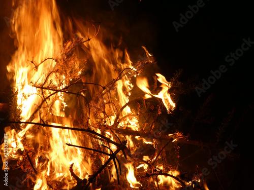Offenes Feuer mit brennendem Tannenbaum - 233329187